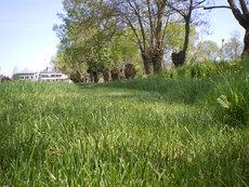 Gestion différenciée des espaces verts avec tonte adaptée - JPEG - 240.6ko